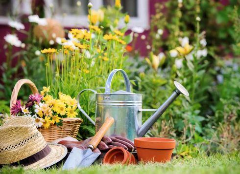 Jardinage : choisir sa haie selon les contraintes