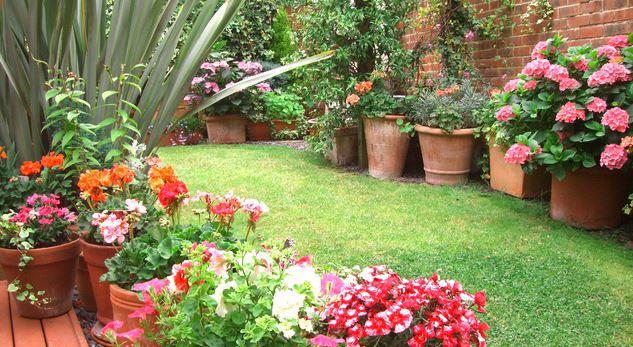 Jardin en pots : les accessoires et contenants pour lui donner du style