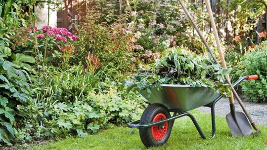 L'été arrive, préparez votre jardin